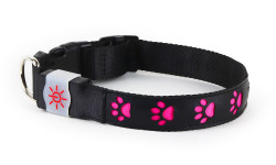 NIGHT SCOUT DOG COLLAR 24PC